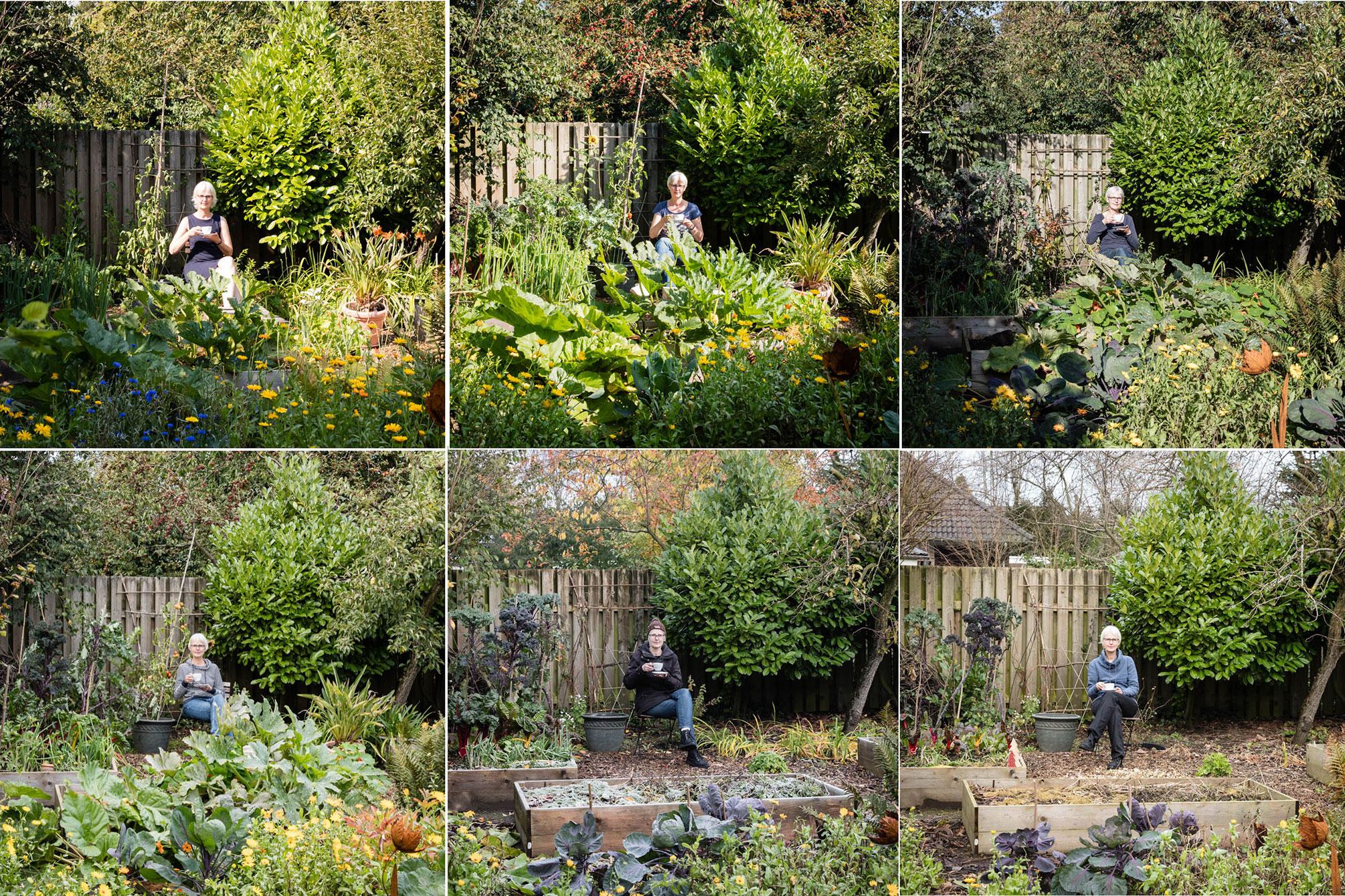 Mein Gartenjahr 2019